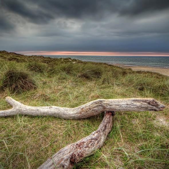 tornby-strand-wood_600