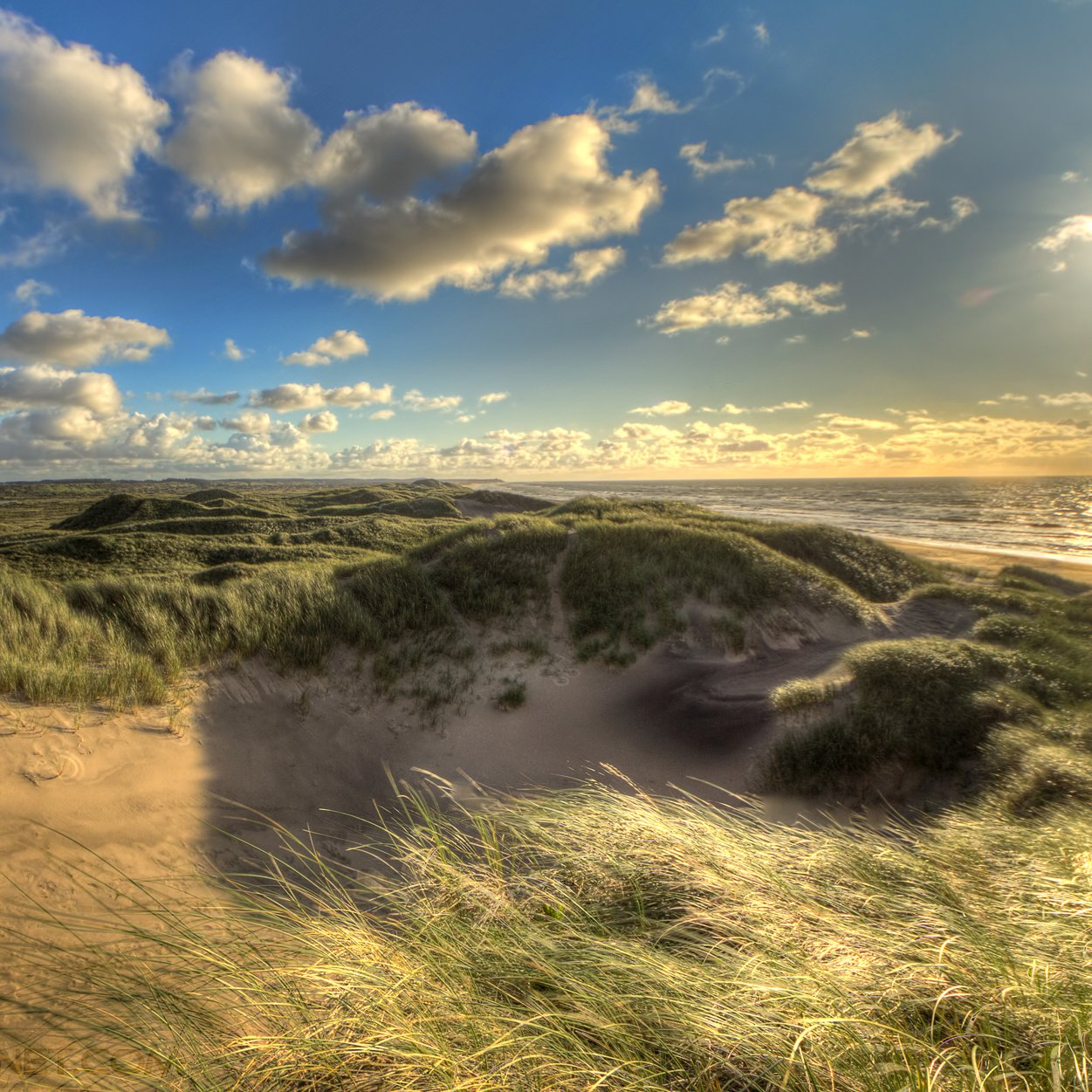 sand dune on north sea coast, Denmark